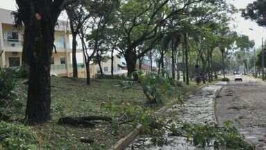 Chuva danifica campus do Instituto Federal do Sul de MG em Muzambinho (MG) - Chuva danifica campus do Instituto Federal do Sul de MG em Muzambinho (MG)