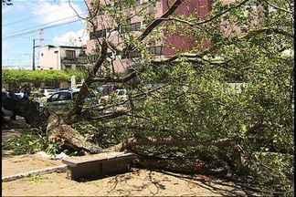 Árvore tomba e galhos atingem mulher em Aracaju - No final da manhã desta terça-feira (22), uma árvore tombou e os galhos atingiram a lavradora Maria Valdina Aragão Veira, 46, que passava pela Praça da Bandeira, em Aracaju.