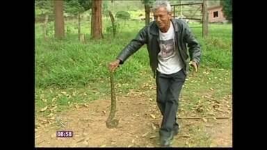 Lavrador é conhecido no interior de Minas Gerais por caçar cobras - Zé das Cobras faz trabalho voluntário e devolve os répteis ao seu habitat