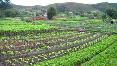 Agricultoras de Juiz de Fora vendem hortaliças minimamente processadas - Os processos são limpeza com água corrente; sanitização; enxague; secagem na centrifugadora e embalagem.