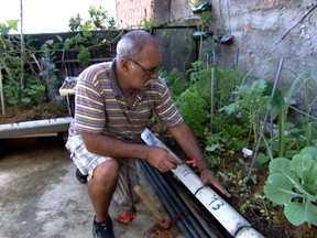 Hortas em favelas do RJ mudam a rotina e trazem ânimo aos moradores - Um grupo de moradores de comunidades de baixa renda do Rio de Janeiro aderiu à horticultura de quintal. Essa é uma união interessante entre ação de política pública, a iniciativa do empresariado e a vontade dos moradores.