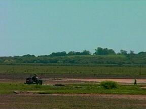 Rio Grande do Sul já semeou mais de 50% da área de arroz - Já são mais de 624 mil hectares plantados no estado, e a estimativa é que a área nesta safra seja de 1,1 milhão de hectares.