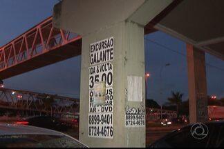 Crime ambiental e contra o patrimônio público em João Pessoa - Cartazes são colados em postes, pontos de ônibus e até em árvores.