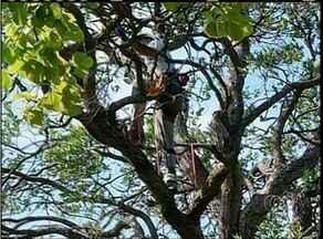 Atividades práticas marcam último dia de congresso de arborização urbana em Palmas - Atividades práticas marcam último dia de congresso de arborização urbana em Palmas