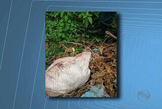 Corpo com sinais de que havia sido esquartejado é encontrado em saco - Corpo estava em matagal da cidade, jogado no meio do lixo e folhas secas.Policiais do Grupo Tático do Interior fizeram o isolamento da área.