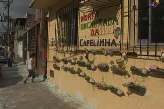 Alunos de uma escola do bairro de Capelinha de São Caetano criam horta na comunidade - O que começou como uma manifestação sobre a questão do lixo, acabou influenciando todo o bairro.