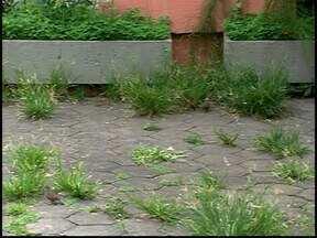 Mato e lixo tomam conta de praça em frente à Câmara de Divinópolis - Moradores reclamam da sujeira do local e pedem providências.Câmara informou que local será reformado; Prefeitura garantiu manutenção.