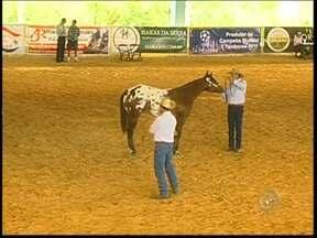 Criadores de cavalos da raça apaloosa são destaques em campeonato de Tietê - Criadores de cavalos da raça apaloosa foram destaque no Campeonato Nacional, realizado na cidade de Tietê (SP). Os animais possuem características marcantes e porte imponente, além de serem de origem americana.