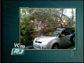 Vento forte derruba árvore em Campos dos Goytacazes, RJ - Registro foi feito por uma telespectadora.Ventos causaram transtorno na cidade.