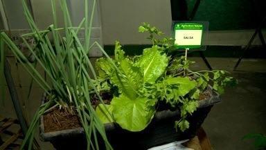 Em Movimento: horta em casa - Aprenda a montar uma hortinha em casa com as dicas da matéria da Laila Magesk!