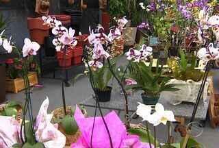 Saiba quais são os cuidados necessários para cultivar orquídeas - Saiba quais são os cuidados necessários para cultivar orquídeas.