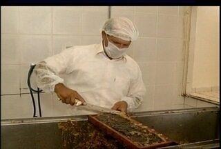 Produção de mel movimenta a economia no Norte de Minas - Buritizeiro se destaca na produção do produto.