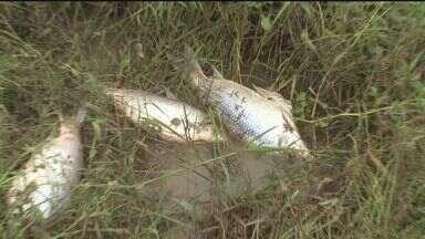 Cidades vizinhas sentem reflexo da tragédia de Itaóca, SP - Os peixes do rio Ribeira estão aparecendo mortos