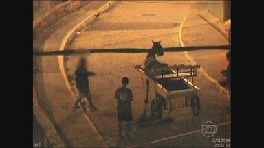 Dois adolescentes foram flagrados maltratando um cavalo no Recife - Imagens foram gravadas pelas câmeras da Secretaria de Defesa Social.