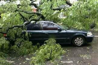 Chuva provoca estragos e alagamentos na Grande São Paulo - No centro da capital, uma árvore atingiu um carro no meio da rua. Na região do ABC, um bairro inteiro ficou debaixo d'água e o corpo de um homem foi resgatado do rio Tamanduateí.