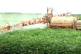 Caravana da Embrapa chega a Balsas, no sul do Maranhão - Agricultores, agrônomos e técnicos receberam informações sobre o controle de uma espécie de lagarta que pode causar grandes prejuízos nas lavouras de soja.