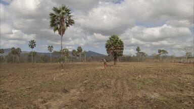 Previsão da Funceme é de seca prolongada por mais um ano - Segundo a Funceme, chance é de 40% de chuva abaixo da média histórica.