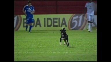 Cachorro invade campo e dribla todo mundo no Paulista - Animal chama mais atenção do que empate sem gols entre Linense e Rio Claro