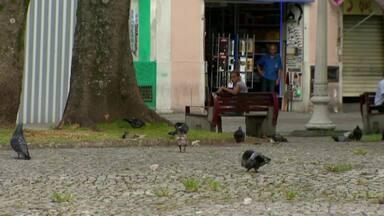 Grande número de pombos nas ruas de Juiz de Fora incomoda moradores - Segundo biólogo, convivência com animais pode ser perigosa. Controle é feito com educação ambiental, diz representante da Prefeitura.