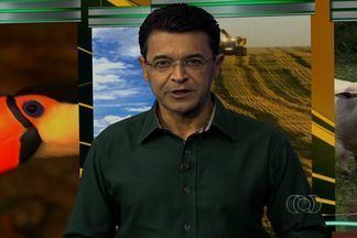 Confira os destaques do Jornal do Campo - Em Goiás, tem início a colheita da soja precoce.