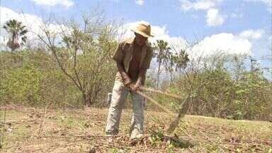 Agricultores preparam terreno e aguardam doação de sementes - Eles são cadastrados no programa Hora de Plantar, que garante doação de grãos.