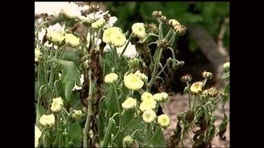 Prejuízos são registrados nas plantações após clima quente da semana - Assista ao vídeo
