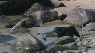 Veranistas insistem em levar o cachorro à praia - Leis proíbem a presença dos animais na areia, mas o desrespeito é frequente.