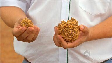 Excesso de chuvas força produtores a colher grãos mais úmidos - Em época de colheita, produtores buscam formas de cumprir o cronograma.