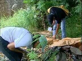 Moradores de Farol se preocupam com uma nova epidemia de dengue - A cidade tem o maior índice de infestação do mosquito que transmite a doença na região de Campo Mourão