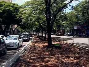 Projeto de revitalização da avenida Brasil em Maringá ainda gera polêmica - As obras começaram há quase um mês