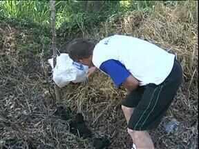 Filhostes de cães são abandonados em meio ao lixo em Cianorte - No meio do lixo que é deixado pelos próprios moradores da cidade, até animais são abandonados.