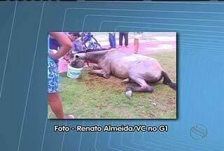 Cavalo vítima de maus tratos morre em hospital veterinário de Aracaju - Animal estava bastante debilitado em praça no Conj. Augusto Franco.Moradores da região tentaram ajudar o animal dando água e comida