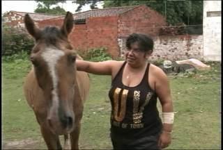 Abandono de cavalos em Santa Maria, RS, causa transtornos - Os animais acabam ficando soltos em ruas e rodovias da cidade, muitas vezes desnutridos e mal cuidados.