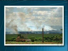 Incêndio atinge Parque Nacional de Ilha Grande - O incêndio teria começado na manhã desta segunda-feira (24). Equipes de bombeiros e brigadistas estão no local combatendo as chamas.