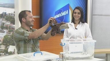 Cresce o número de vítimas de ataque de animais peçonhentos em Rondônia - O Biólogo Flávio Terassini, dá dicas de cuidados e precauções que devem ser tomadas.