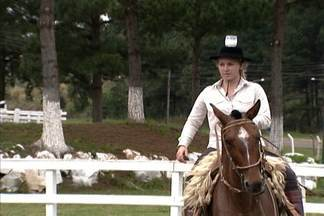 Cavalos marchadores são considerados os mais confortáveis para montaria - O Brasil tem um dos maiores rebanhos de cavalos e burros do mundo.