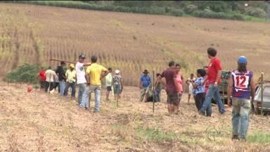 Duas fazendas são invadidas em Florestópolis - São mais de 500 famílias que ocupam as duas áreas. Uma delas tinha sido desocupada há pouco tempo.