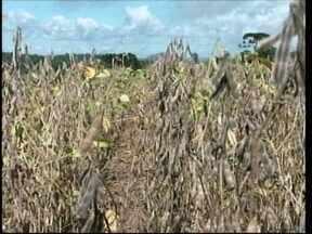 Estiagem que atingiu Oeste dá prejuízos aos produtores e expectativa é que a chuva ajude - Estiagem que atingiu Oeste dá prejuízos aos produtores e expectativa é que a chuva ajude