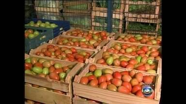 Preço do tomate dispara no mercado - Na região de Sorocaba (SP) a caixa do tomate é vendida por R$ 100, em média. As mudanças climáticas, a mão-de-obra, o aumento no custo de produção e as perdas nas lavouras são alguns dos fatores que contribuíram para a alta.