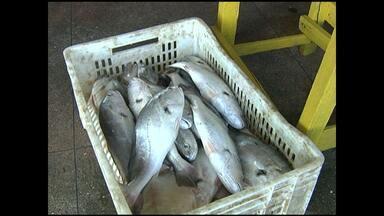 Período do defeso encerra neste sábado para oito espécies de peixes - Pescadores esperam que as vendas aumentem com o fim do defeso.