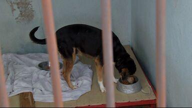 Pessoas se unem para combater os maus tratos aos animais - Organizações cuidam de animais que sofreram maus tratos ou forma abandonados