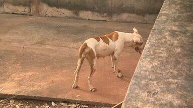 Mulher terá que pagar multa por abandono de cães em Jaboticabal, SP - Suspeita é de que um dos animais morreu de fome.