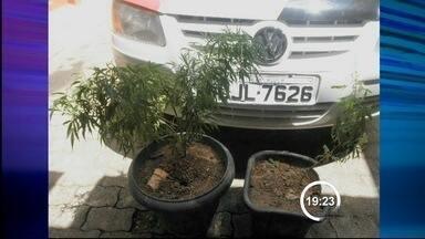 Homem é preso com drogas e armas em Cunha, SP - Polícia encontrou dois pés de maconha na casa dele.