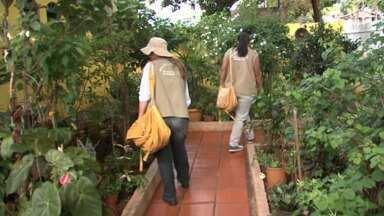 Mais de 800 pessoas já tiveram dengue este ano em Maringá - Número de casos confirmados cresce a cada semana