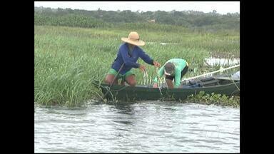 Pescadores fazem limpeza de lagos em Santarém - O trabalho nos lagos do Mapiri e Papucu marcou o dia mundial da água para quem depende diretamente dos rios para sobreviver.