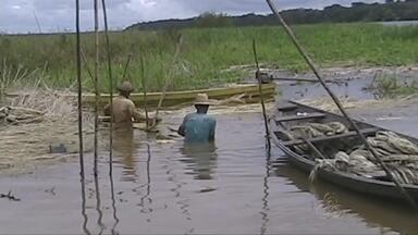 Em Manacapuru, no AM, a subida Rio Solimões prejudica - O nível da água já subiu mais de quinze centímetros acima do normal.
