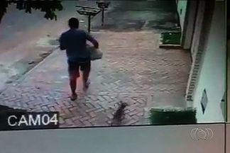 Morador de Goiânia tem cadela roubada - Imagens de câmeras de segurança mostram um homem perto da casa da vítima. Ele pega o animal no colo e sai correndo.