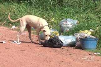 A população reclama da coleta irregular do lixo em Codó - Aos poucos, a cidade vai se transformando num lixão.