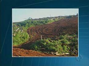 Polícia Ambiental descobre desmatamento gigante em Goioxim - A área corresponde a mais de 40 campos de futebol. Duas pessoas foram presas em flagrante.