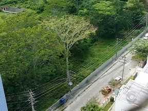 Corte de Garapuvu, árvore símbolo de Florianópolis, gera indignação de moradores - Corte de Garapuvu, árvore símbolo de Florianópolis, gera indignação de moradores